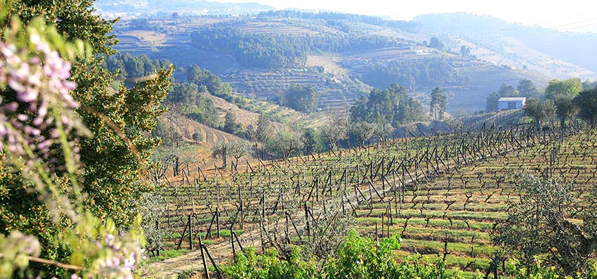 Douro Valley is great for wine tasting holidays in Europe - Sherpa Expeditions