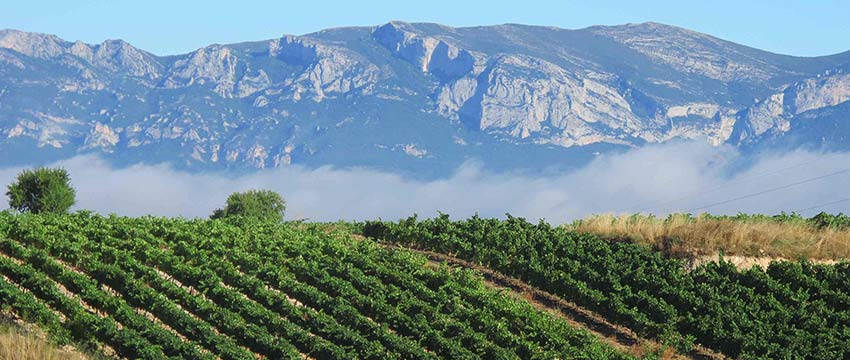 Walking and cycling holidays near Rioja vineyards with Sherpa Expeditions