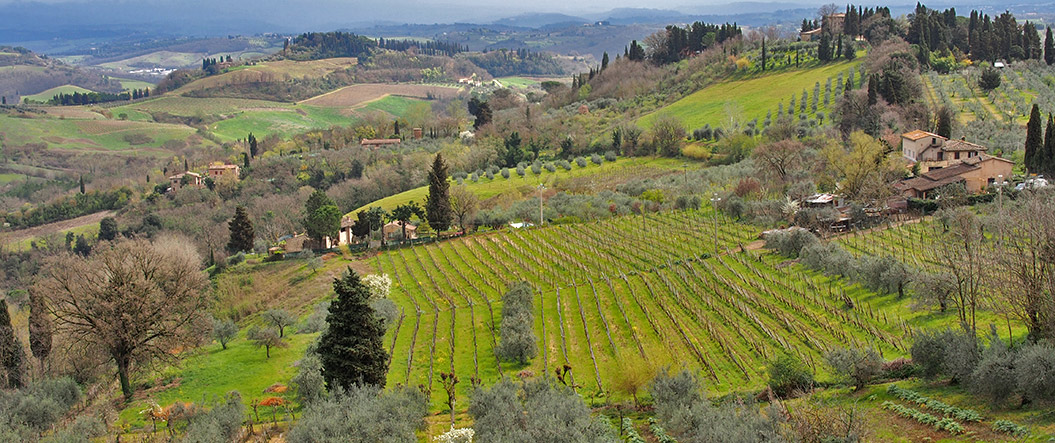 tuscany grows grapes for Chianti_here in April_Sherpa Expeditions