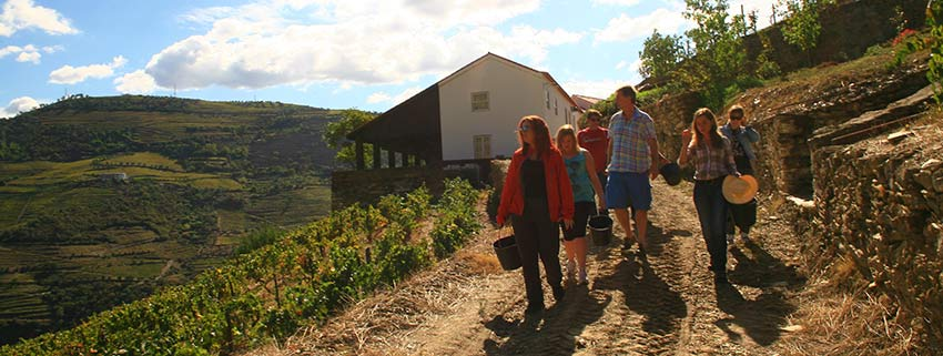 grape harvest season in Douro Valley, Portugal - Sherpa Expeditions