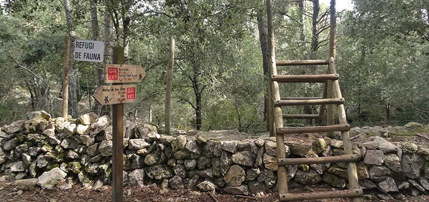 forest walks in Majorca with Sherpa Expeditions