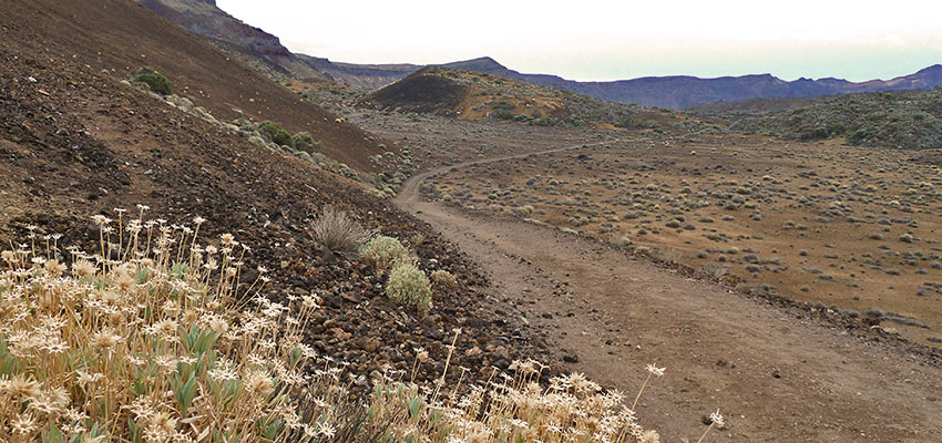 Waymarked trails in Tenerife for walking - Sherpa Expeditions