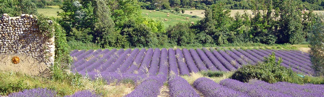 walking holidays in Provence - Sherpa Expeditions