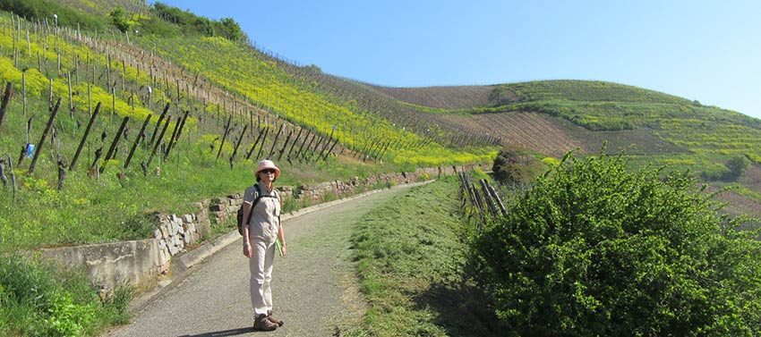 On the Camino Trail, Alsace France, Sherpa walking holidays