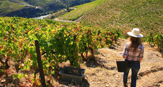 Self Guided Walking Holidays in Douro Valley Portugal